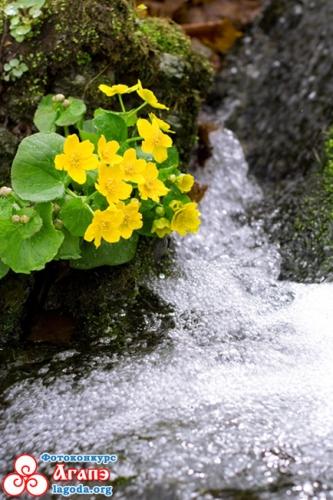 Весенние потоки. Приморский край.