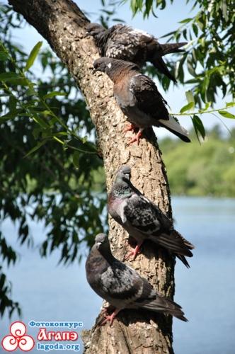 Посиделки на дереве