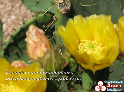 Цветы Духовного