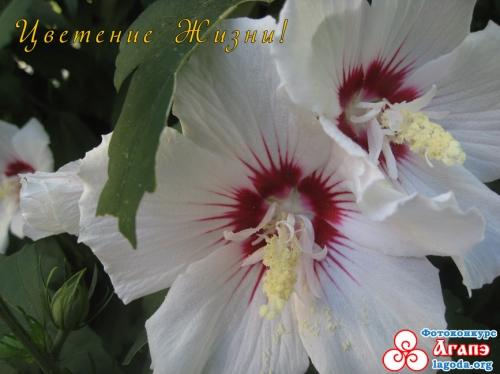 Цветение Жизни