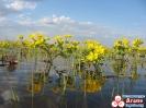Цветы на болоте