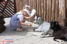 Стану я ветеринаром - покормлю козлят я даром!
