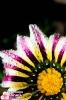 Природное многообразие цветов
