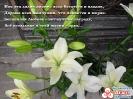 Лилия - символ Доброты