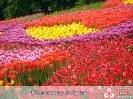 Весна - пора зарождения ДоброТы