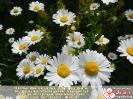 Цветы на добро щедры